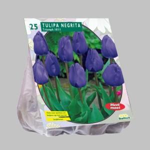 poza Bulbi de lalele  'TULIPA NEGRITA'  25 buc/pachet, culoare mov inchis
