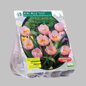 poza Bulbi de lalele  'TULIPA MINI WILD' 15 buc/pachet, culoare roz cu mijlocul galben