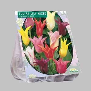 poza Bulbi de lalele 'TULIPA LELIEBLOEMIA MIX'  25 buc/punga, culori mixte, flori deosebite