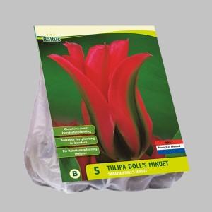 poza Bulbi de lalele  'TULIPA DOLL'S MINUET' 5 buc/pachet, culoare rosie cu nervura verde