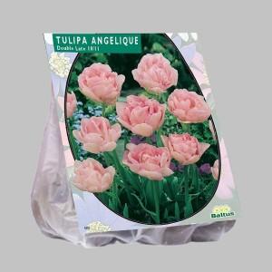 poza Bulbi de lalele  TULIPA ANGELIQUE 20 buc/pachet, culoare roz deschis