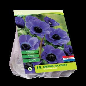 poza Bulbi flori de gradina Anemone Mr. Fokker, 50 bulbi /pachet