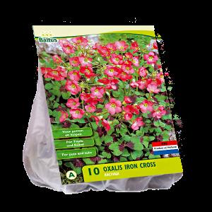 poza Bulbi flori primavara Oxalis Deppei Iron Cross, 10 bulbi/pachet