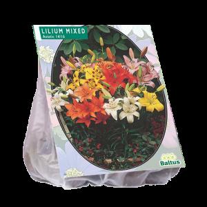 poza Bulbi flori primavara Lilium `Mix`, pachet 5 bulbi
