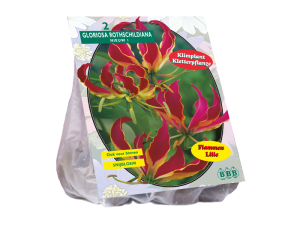 poza Bulbi de primavara Gloriosa Rothschildiana 2 buc/pachet