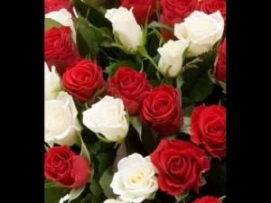 poza Trandafiri de gradina pe picior, radacina ambalata, soiul 'Red and White'