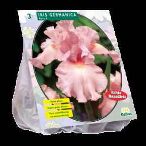 poza Bulbi flori de gradina Iris germanica Roze,3 rizom / pachet