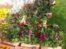 Flori bienale de gradina