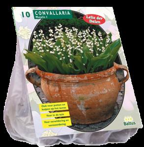 poza Bulbi flori gradina , margaritar, `Convallaria Majalis` ,10 rizomi/pachet