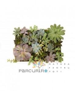 poza Tablou Viu Multifunctional Din Plante Suculente