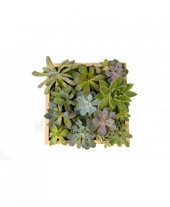poza Tablou Viu Din Plante Suculente Mediu