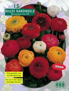 poza Bulbi plante 'Ranunculus', flori mixte, 15 bulbi / pachet