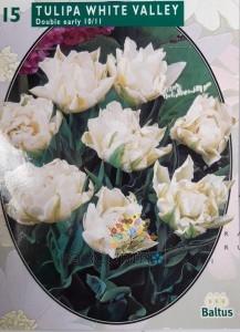 poza Bulbi de lalele  WHITE VALLEY 15 buc/pachet, culoare alba