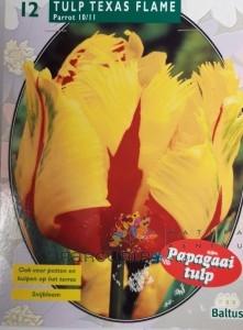 poza Bulbi de lalele grupa Papagal  TEXAS FLAME PARKIET 12 buc/punga, culoare galben cu rosu, flori franjurate
