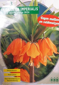poza Bulbi de FRITILLARIA IMPERIALIS AURORA, 3 buc/punga, culoare portocalie