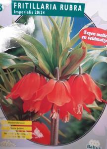 poza Bulbi de FRITILLARIA IMPERIALIS RUBRA, 3 buc/punga, culoare rosie