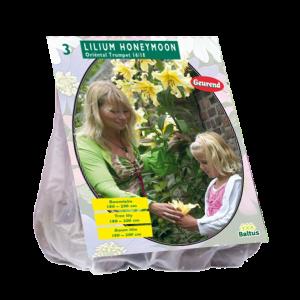 poza Bulbi flori primavara Lilium Honeymoon, 3bulbi/ghiveci