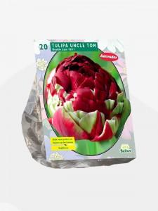 poza Bulbi de lalele Duble tarzii, UNCLE TOM  flori duble, rosu grena punga 20 bulbi