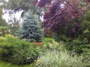 Galerie foto Ansamblu de plante intens colorate folosite in decorarea gradinilor si parcurilor