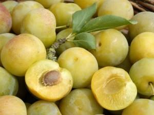 poza Pomi fructiferi pruni  pe rod soiul Reine Claude Dore  1/2 F , la ghiveci de 15l