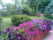 Galerie foto Amenajari parcuri, gradini publice si gradini private cu jardiniere de flori curgatoare pentru terase si balcoane.