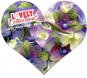 poza Arbusti gradina HYDRANGEA MACROPHYLA LOVLEY COLECTION (hortensia) h= 30-40cm ghiveci 5 litri