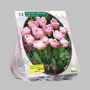 poza Bulbi de lalele  TULIPA UPSTAR 12 buc/pachet, culoare roz deschis