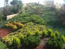 Plantari arbori, arbusti si flori