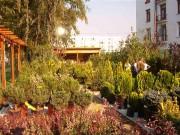 Galerie foto Magazin de plante si produse pentru amenajarea si intretinerea gradinilor, arborilor, arbustilor, gazonului, instalatiilor si sistemelor de irigatii si dernaj.