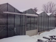 Galerie foto Constructii sere din sticla sau policarbonat pe structura metalica