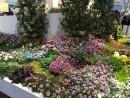 Bulbi de dalii, irisi, lacramioare, begonii, crini, gladiole, margaritar, cu plantare primavara