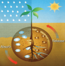 Hidrogel agricol sau horticol