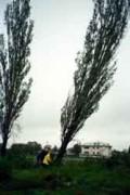 Taieri si toaletari arbori uscati, copaci cazuti sau pomi periculosi. Taieri crengi periculoase la arbori inalti.