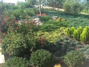 Galerie foto Acoperis verde cu vegetatie tapetanta, plante taratoare