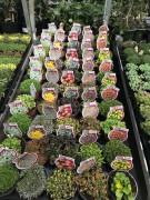 Plante aromatice diverse pentru gradina
