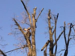 poza Doborari taieri arbori cu inaltime sub 6 metri. Pomi si copaci uscati inalti cazuti sau periculosi.