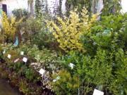 Vanzari online de plante, flori, materiale si produse de gradina