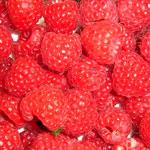 poza Arbusti fructiferi Zmeur la ghiveci