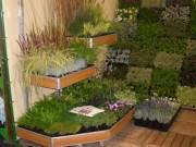 Galerie foto Magazin online de plante, flori, pamant de plantare, gazon, ingrasaminte, materiale si accesorii de gradina