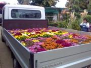 Livrare plante de gradina, flori anuale, bienale si perene, pamant vegetal, gazon seminte sau rulouri si accesorii de gradina.