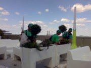 Servicii de ingrijire gazon si intretinere plante ornamentale de gradina.