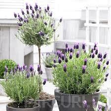 poza Plantari arbori, arbusti si flori de gradina in containere sau cu balot de pamant de 5-7 litri