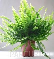 poza Plantari arbori, arbusti si flori de gradina in containere sau cu balot de pamant de 10-12 litri.