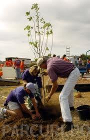 poza Plantari arbori, arbusti si flori de gradina in containere sau cu balot de pamant de 15 litri.