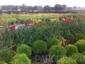 poza Plantari arbori, arbusti si flori de gradina in containere sau cu balot de pamant de 20 litri