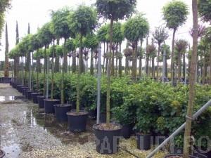 poza Plantari arbori, arbusti si flori de gradina in containere sau cu balot de pamant de 70 litri.
