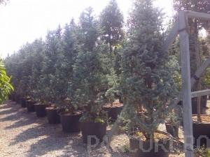 Poza Plantari plante de gradina: arbori, arbusti si flori in ghivece sau containere.