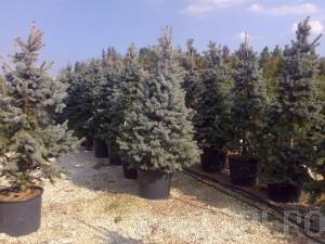 poza Plantari arbori, arbusti si flori de gradina in containere sau cu balot de pamant de 110 litri.