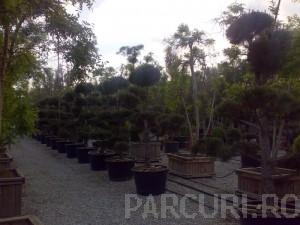 poza Plantari arbori, arbusti si flori de gradina in containere sau cu balot de pamant de 130 litri.