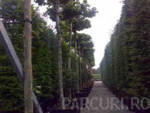 poza Plantari arbori, arbusti si flori de gradina in containere sau cu balot de pamant de 150 litri.